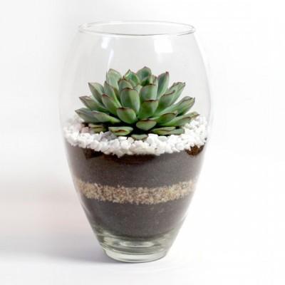 Флорариум в овальной вазе