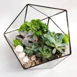 Флорариум Икосаэдр с 5 растениями_ArtFloria
