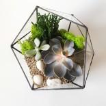 Флорариум Икосаэдр с 3 растениями_ArtFloria