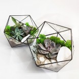 Флорариум Икосаэдр с 3 и 5 растениями_ArtFloria