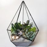 Флорариум Капля с 5 растениями_ArtFloria