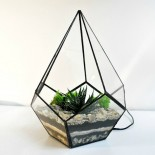 Флорариум Капля с 1 растением_ArtFloria