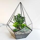 Флорариум Капля с 3 растениями_ArtFloria