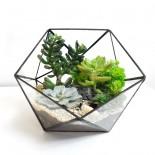 Флорариум Икосаэдр с 3 растениями_4