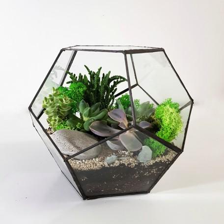 Флорариум Додекаэдр с 5 растениями_ArtFloria