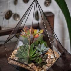 Геометрический флорариум «Бриллиант»