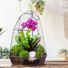 Геометрический флорариум с орхидеей